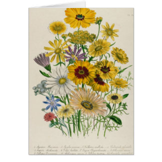 Daisies, plate 31 from 'The Ladies' Card