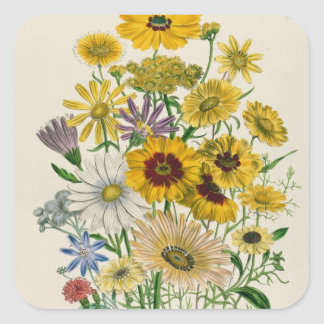 Daisies, plate 31 from 'The Ladies' Square Sticker