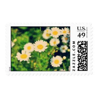 Daisies Postage