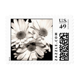 Daisies Postage Stamps