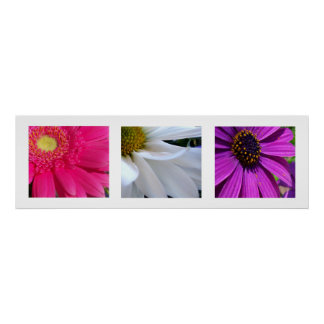 Daisies Posters