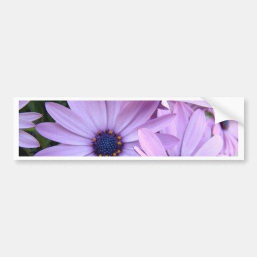 DAISIES Purple Pink Daisy 1 Cards Gifts Mugs Car Bumper Sticker