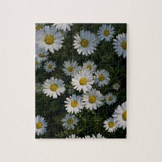 Daisies Puzzle