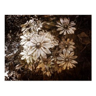 Daisies, Sepia, Grunge Postcard