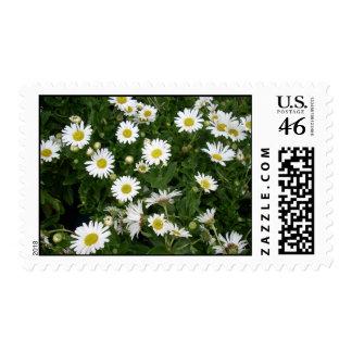 Daisies Stamp