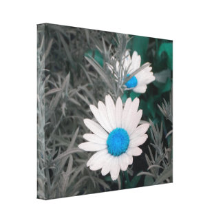 Daisies (w/Blue) Wrapped Canvas Canvas Print