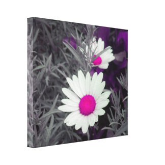 Daisies (w/Pink) Wrapped Canvas Canvas Print