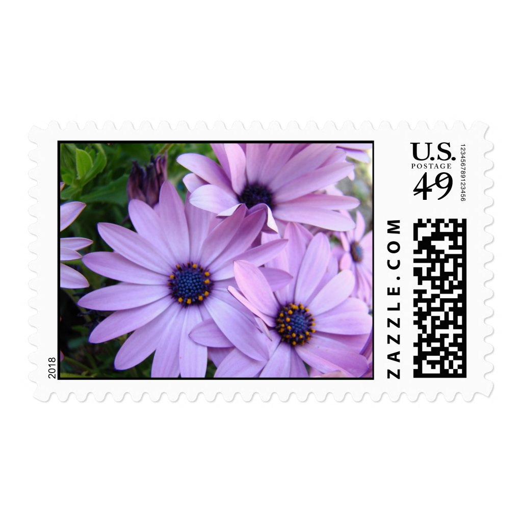 Daisies Wedding POSTAGE 1 Daisy Flowers Stamps