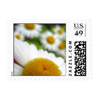 Daisies Wedding Postage Stamps