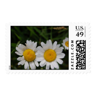 Daisies won't tell postage