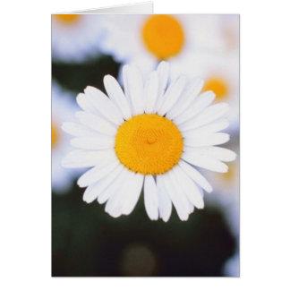 Daisiest Daisy Card