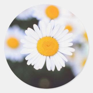 Daisiest Daisy Classic Round Sticker