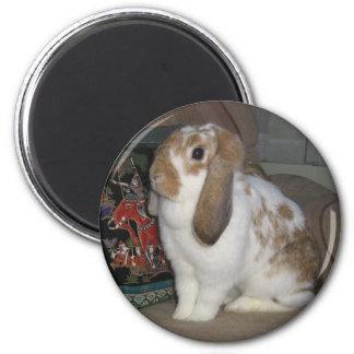 Daisy 2 Inch Round Magnet