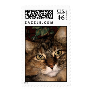 Daisy 3 postage stamps