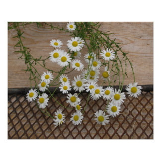 Daisy Abstract Canvas Poster