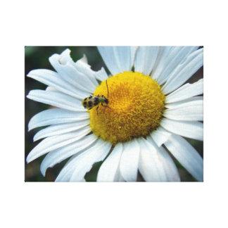 Daisy and Baby Ladybug Canvas Print