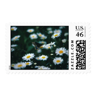 Daisy And Butterfly Postage stamp