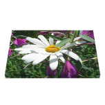 Daisy and Fireweed Canvas Print