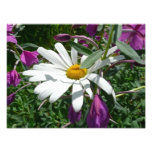 Daisy and Fireweed Photo Print