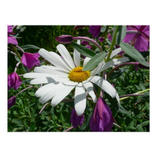 Daisy and Fireweed Poster