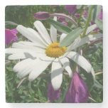 Daisy and Fireweed Stone Coaster