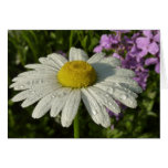 Daisy and Summer Lilac Card