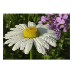 Daisy and Summer Lilac Photo Print