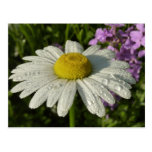 Daisy and Summer Lilac Postcard