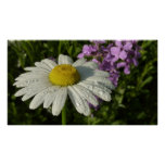 Daisy and Summer Lilac Poster