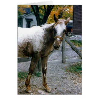 """Daisy""  Appaloosa Filly Card"