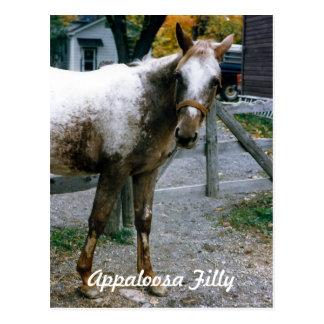 """""""Daisy""""  Appaloosa Filly Postcard"""