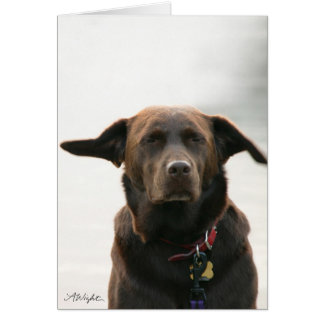 Daisy at the Beach Card