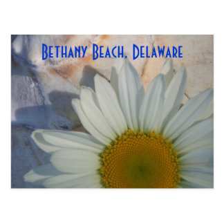 Daisy Bethany Beach Postcard