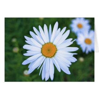 Daisy, Blank Card