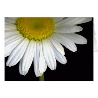 Daisy Bloom Greeting Card