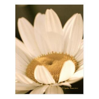 """Daisy Bloom!"" Postcard"
