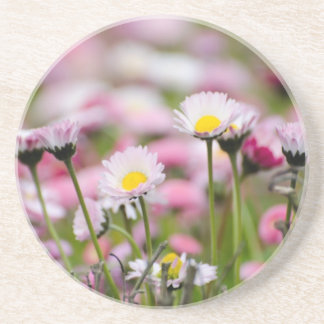 Daisy Blossoms Elegant Romantic Wedding Parties Coaster