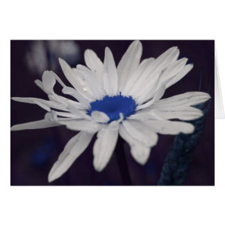 Daisy Blue Center Flower Photography Card