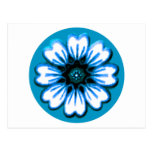Daisy Blue The MUSEUM Zazzle Gifts Postcard