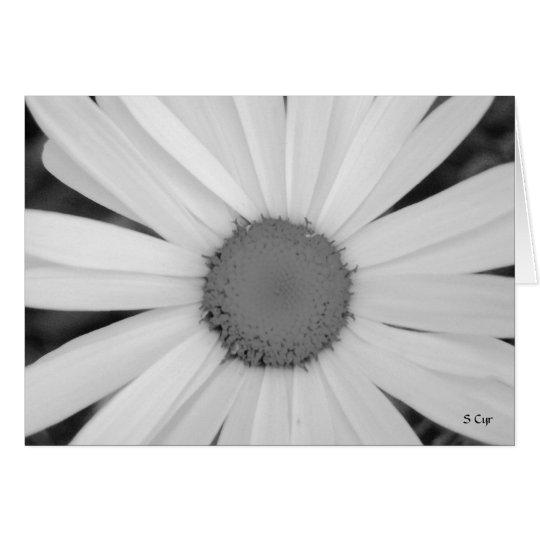 Daisy BW, S Cyr Card