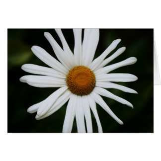 """daisy"" by Larry Coressel Card"
