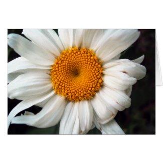 Daisy card