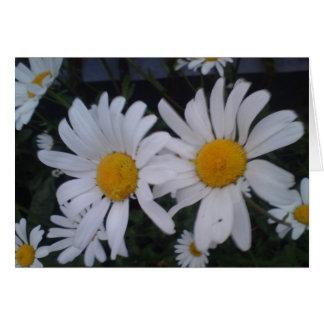 Daisy card/ thank you card