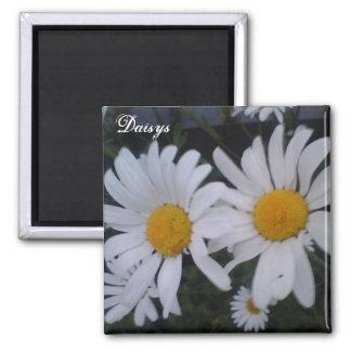 Daisy card/ thank you card magnets