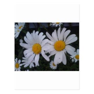 Daisy card/ thank you card postcard