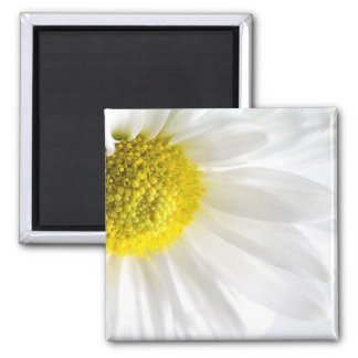 Daisy Close-Up 2 Inch Square Magnet