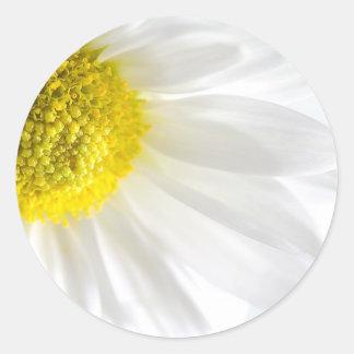 Daisy Close-Up Classic Round Sticker