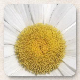 Daisy Close-Up Coaster
