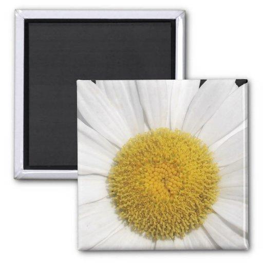 Daisy Close-Up Magnets