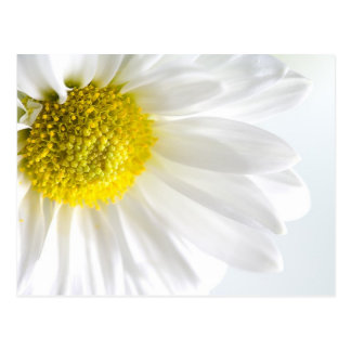 Daisy Close-Up Postcard